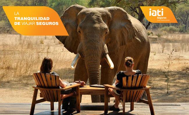 elefantes iati seguros