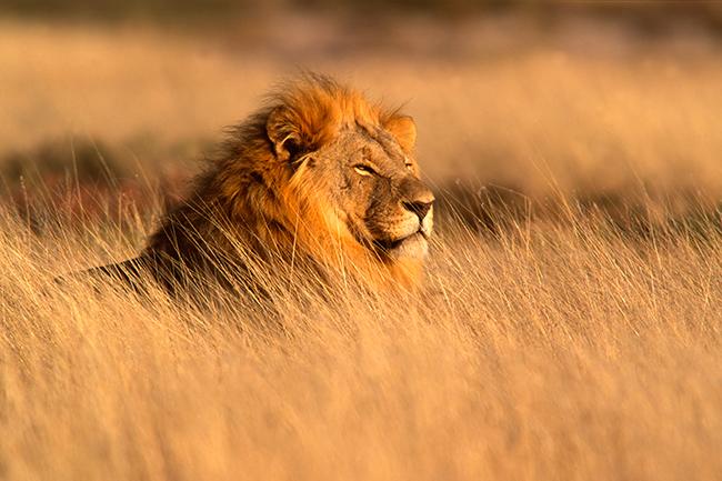 Seguro de viaje para África