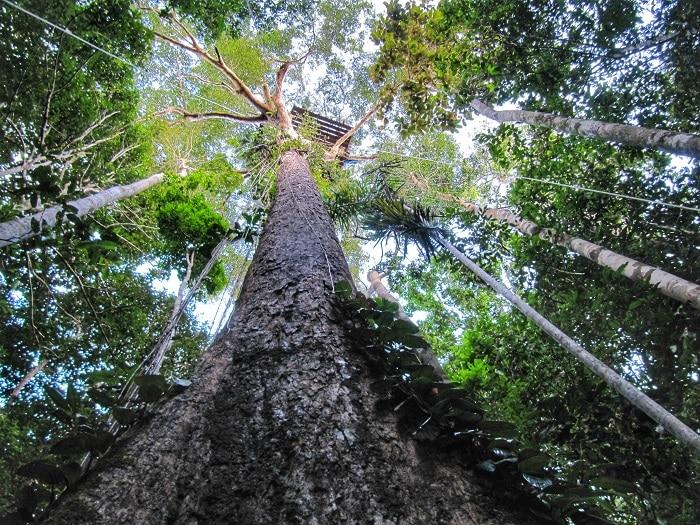 subir-a-la-copa-de-un-arbol-en-el-amazonas1