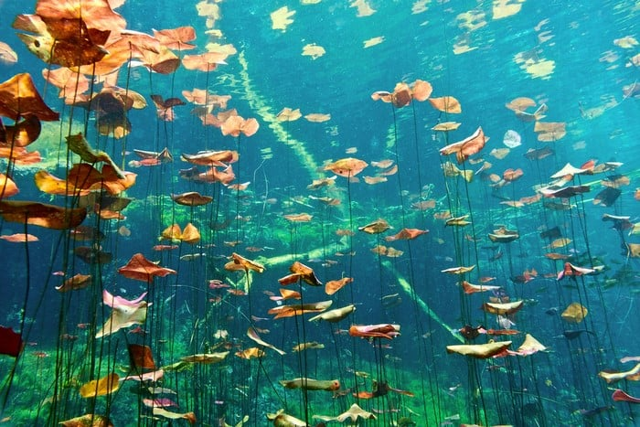 mejores cenotes de Riviera Maya