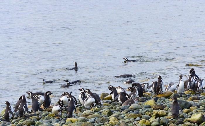 que ver en Chile Punta Arenas