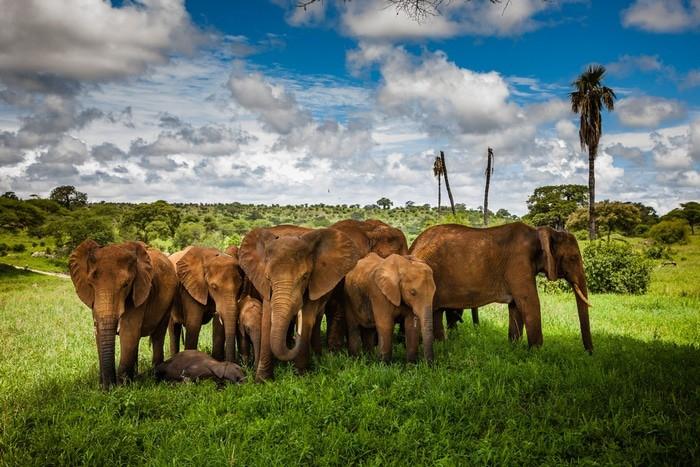 Ruta por Tanzania