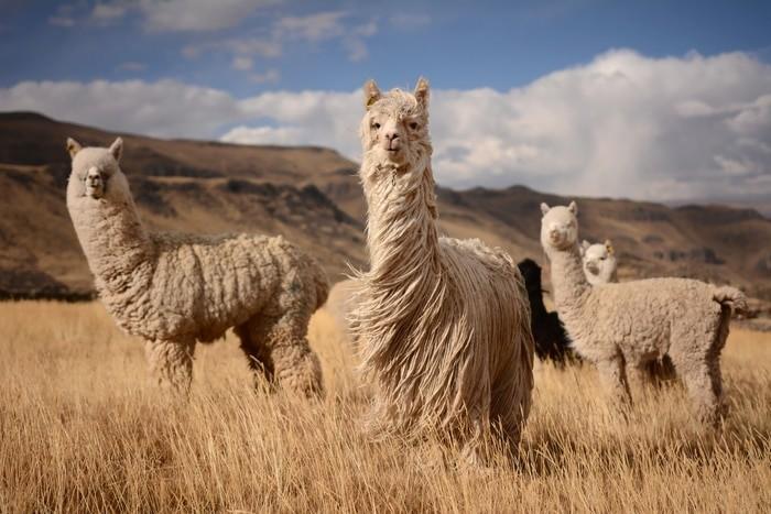¿Es seguro viajar a Perú?