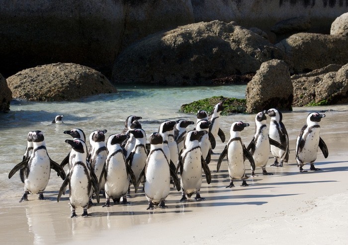 Que hacer Cape Town