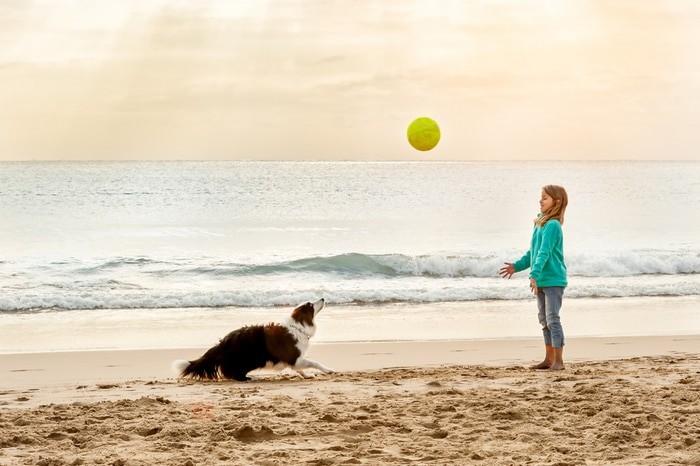 playa para mascotas