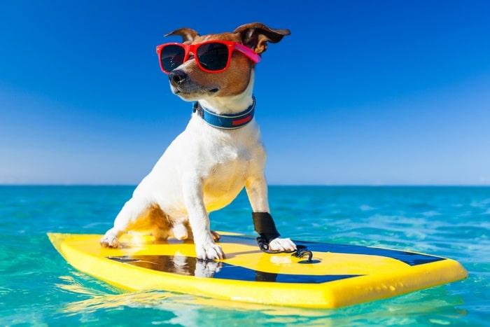 ir a la playas con animales