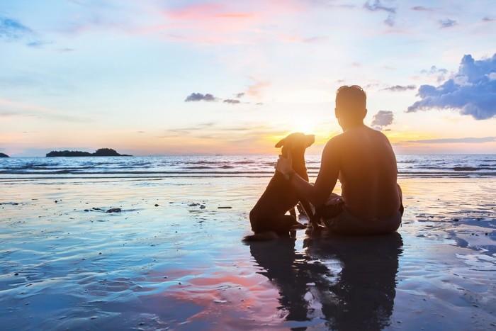 playas permitidas para perros