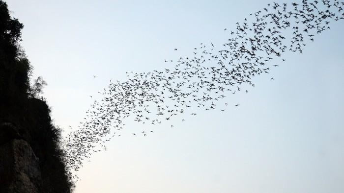murciélagos en Battambang