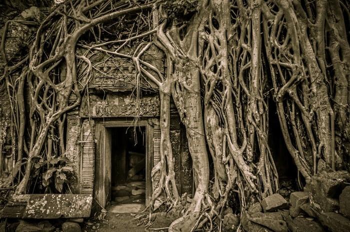 árbol de Tomb Raider en Angkor Wat
