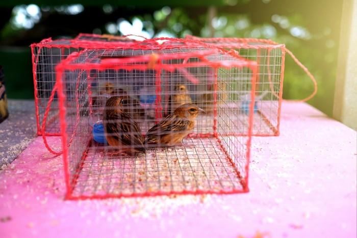 liberar pájaros enjaulados