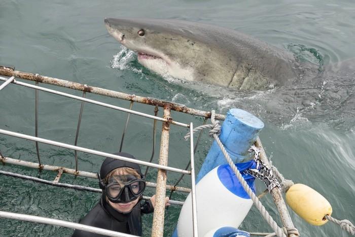 inmersión tiburón blanco