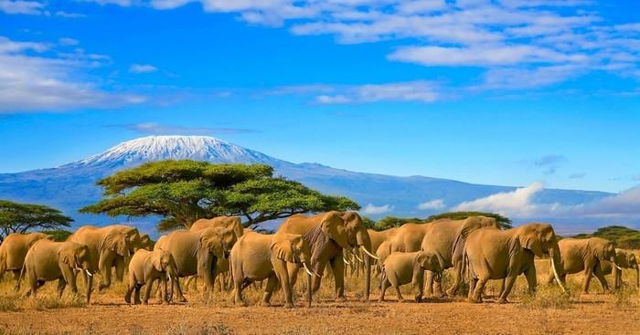 Reservas Nacionales Kenia