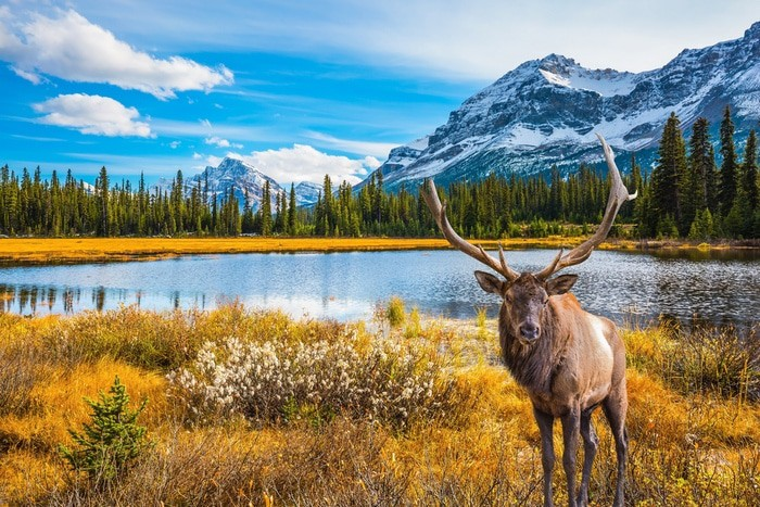 viajar a Canadá asegurado