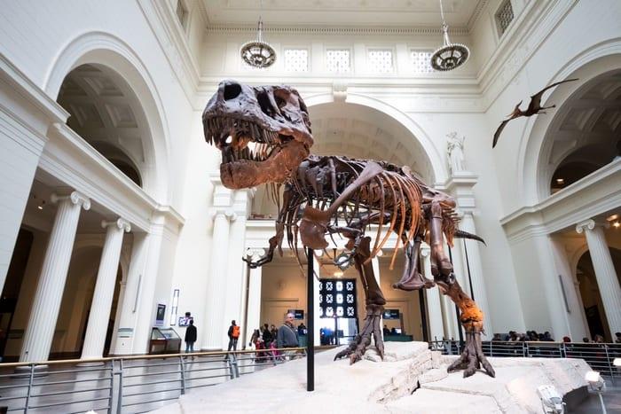 Museo de Historia Natural Chicago