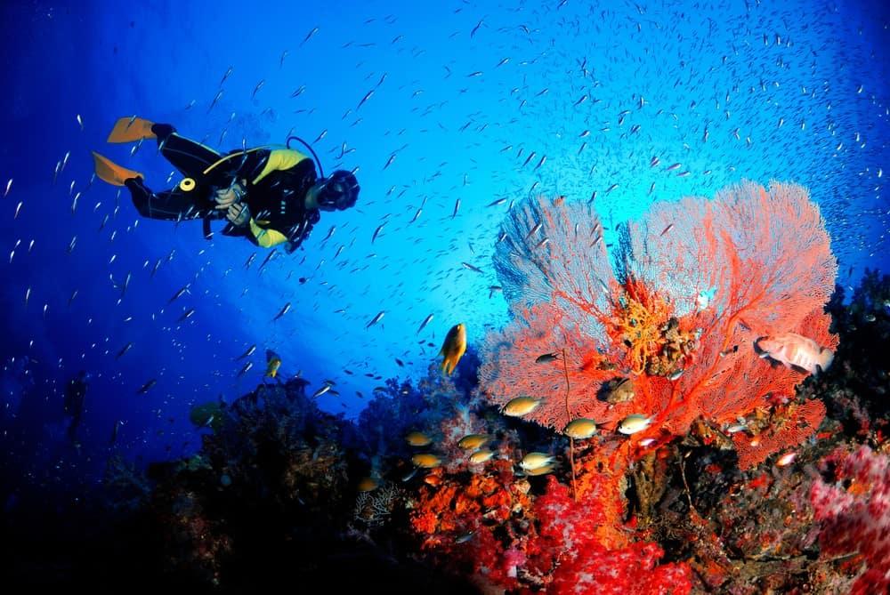 buceo en Tailandia, mejores lugares