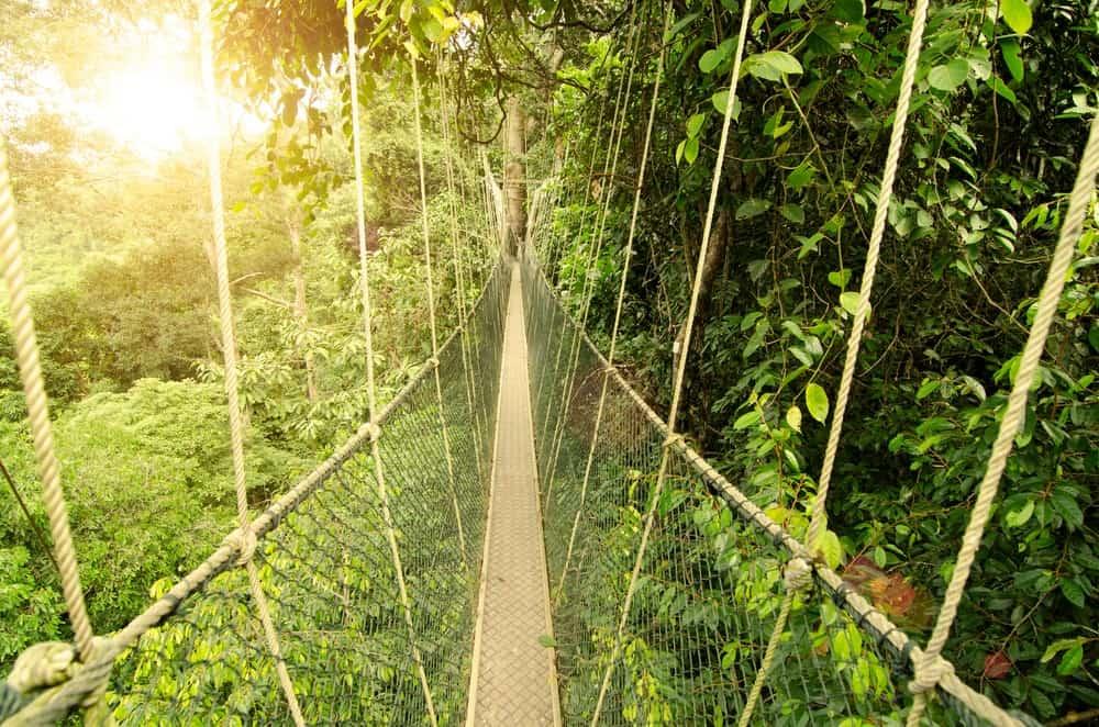 Taman Negara, que ver en Malasia