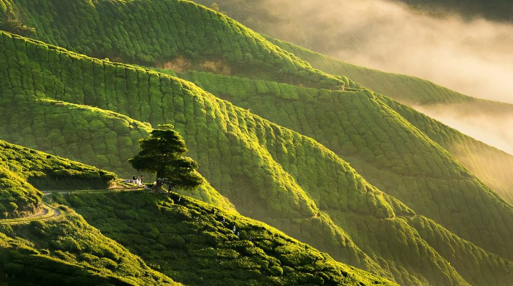 Cameron Highlands , imprescindible que ver en Malasia