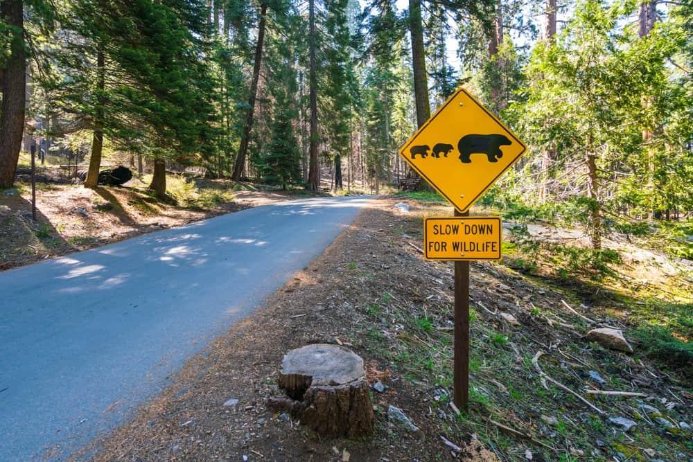 osos grizzly en Alaska