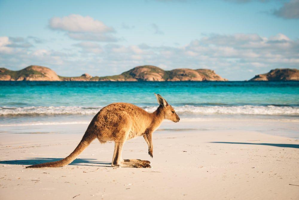 seguro de viaje Working Holiday Australia