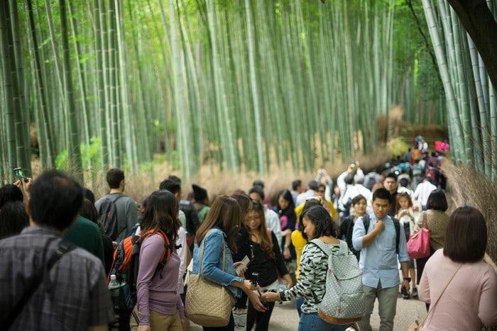 expectativa vs realidad bosque de bambú Kioto