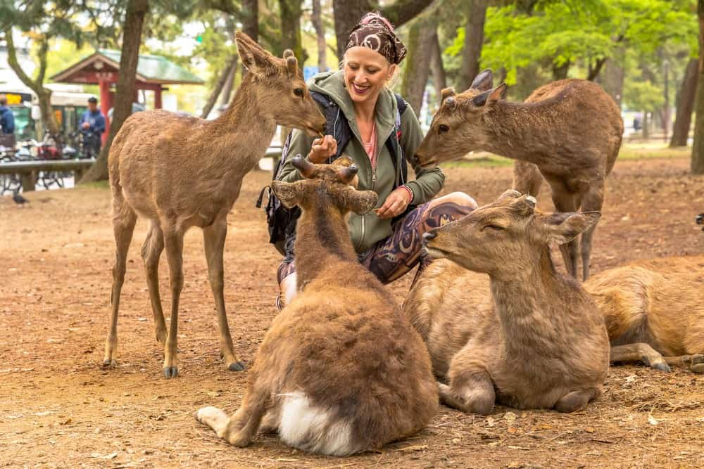 ir a Nara desde Kioto