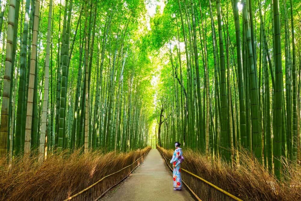 ver en Kioto el bosque de bambú Arashiyama