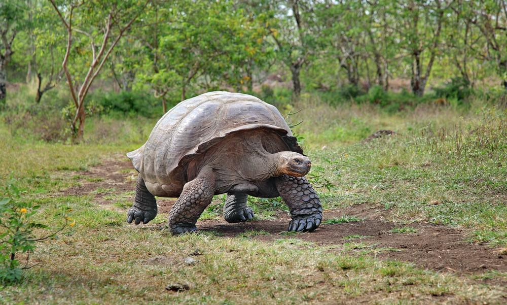 que hacer en Islas Galapagos
