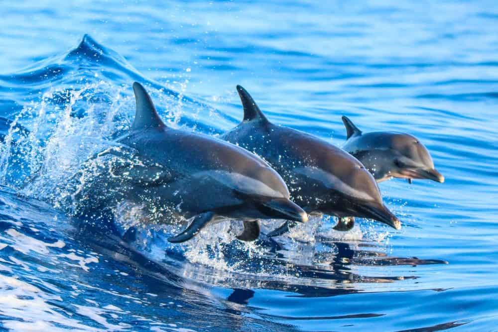 que ver en Islas Galápagos