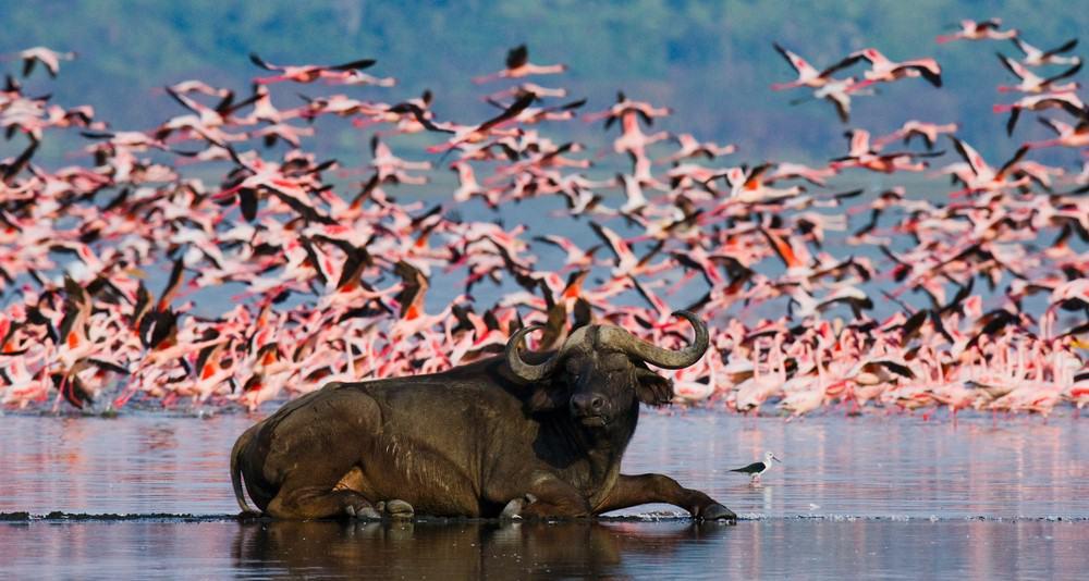 Lago Nakuru en la ruta por Kenia