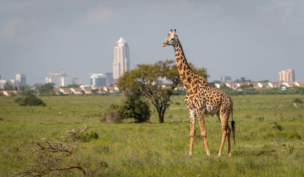 visitar Nairobi Kenia
