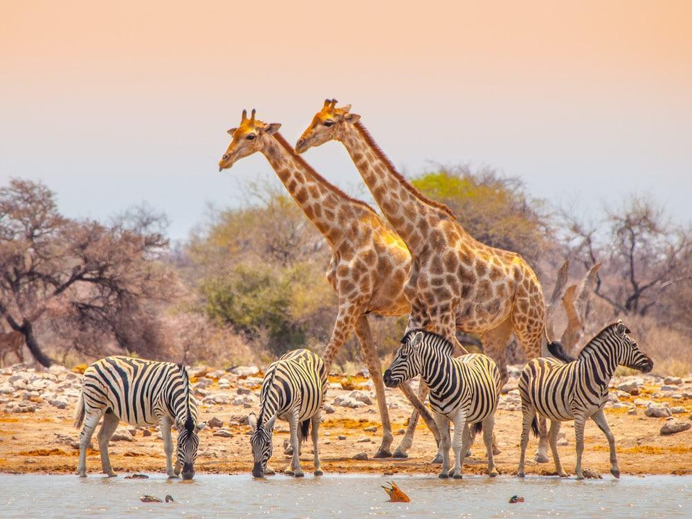 que ver en Namibia