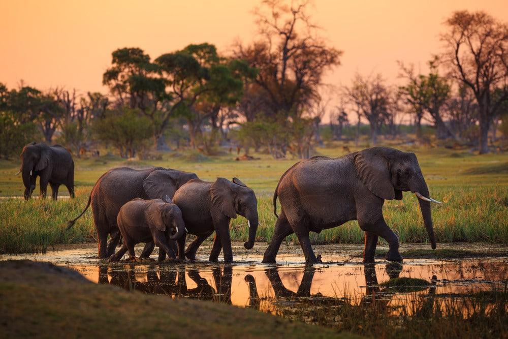 que hacer Botswana