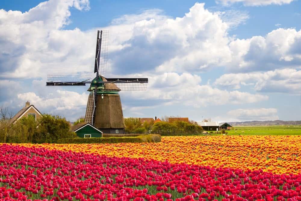 fiesta del tulipán en Países Bajos por primavera