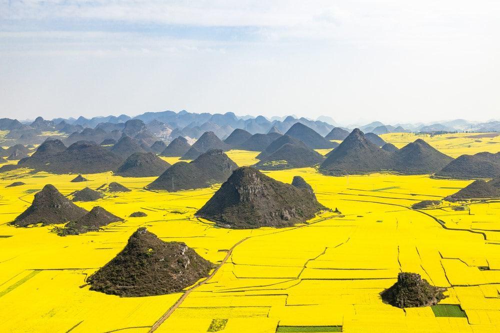 flores amarillas de China