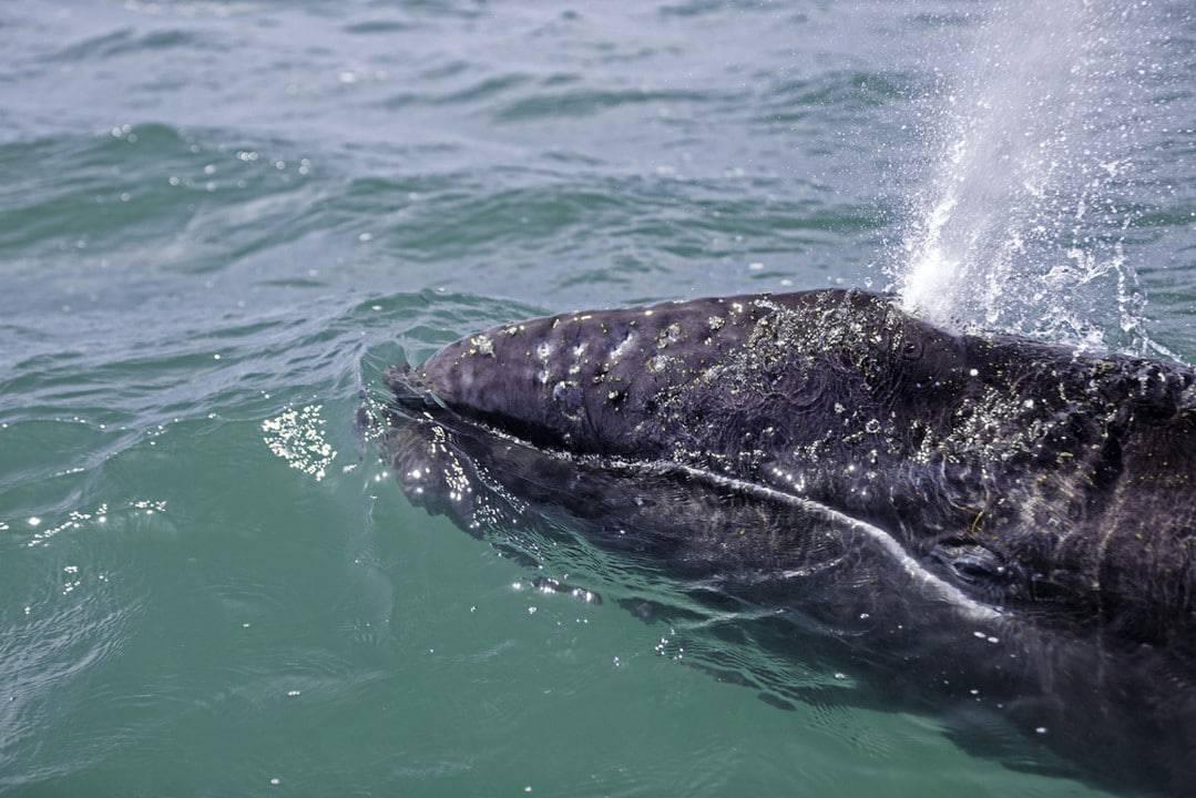 ballenas en Baja California