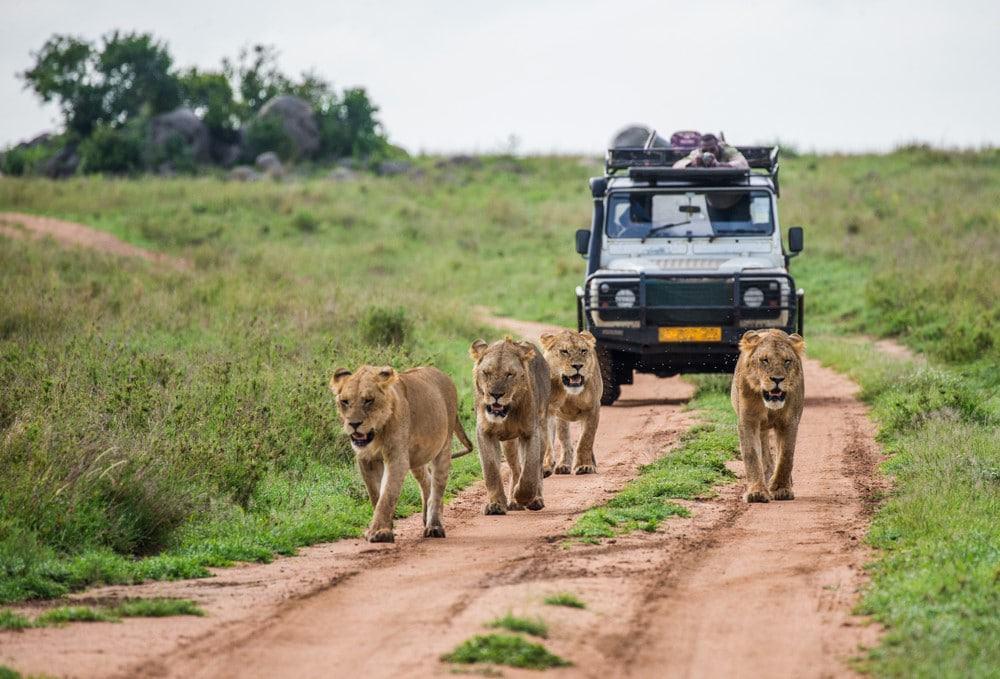 seguridad en Kenia