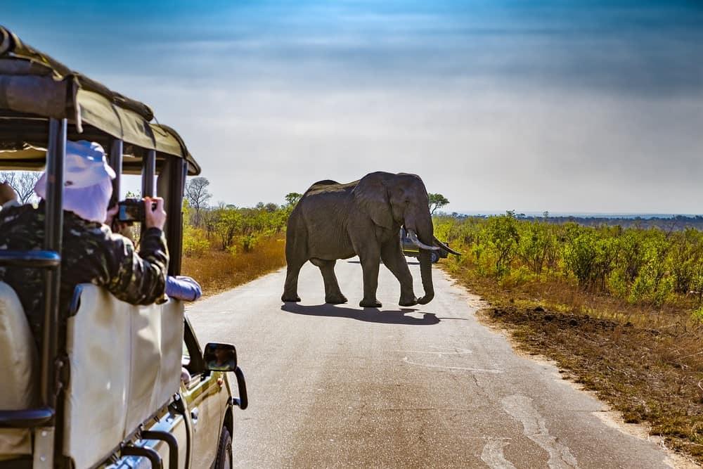 safari en Sudamérica con amigas
