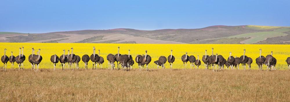 roadtrip por la Ruta Jardín de Sudáfrica