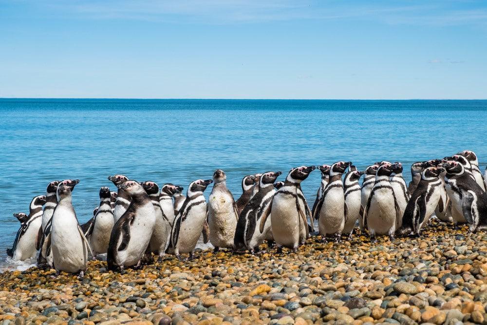Pinguinos en Ushuaia, Argentina