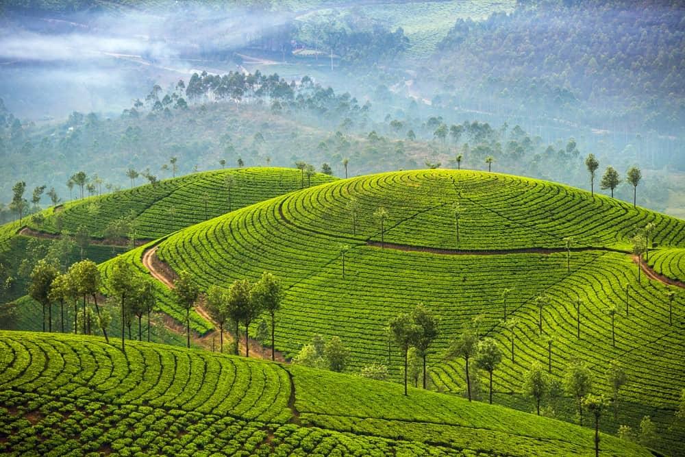 campos de te en Sri Lanka