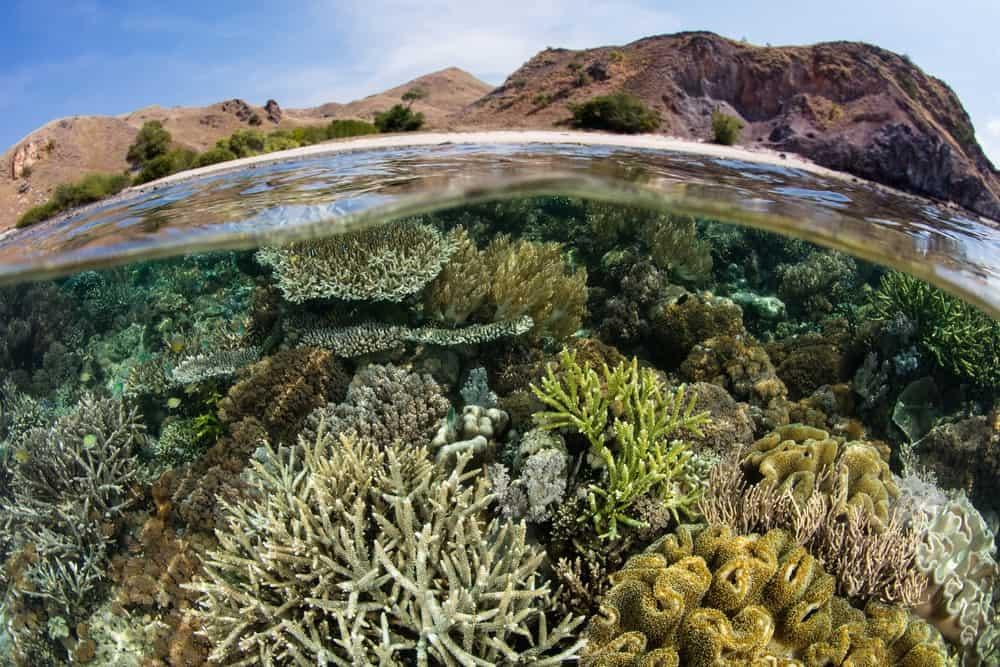 buceo en Komodo, Indonesia