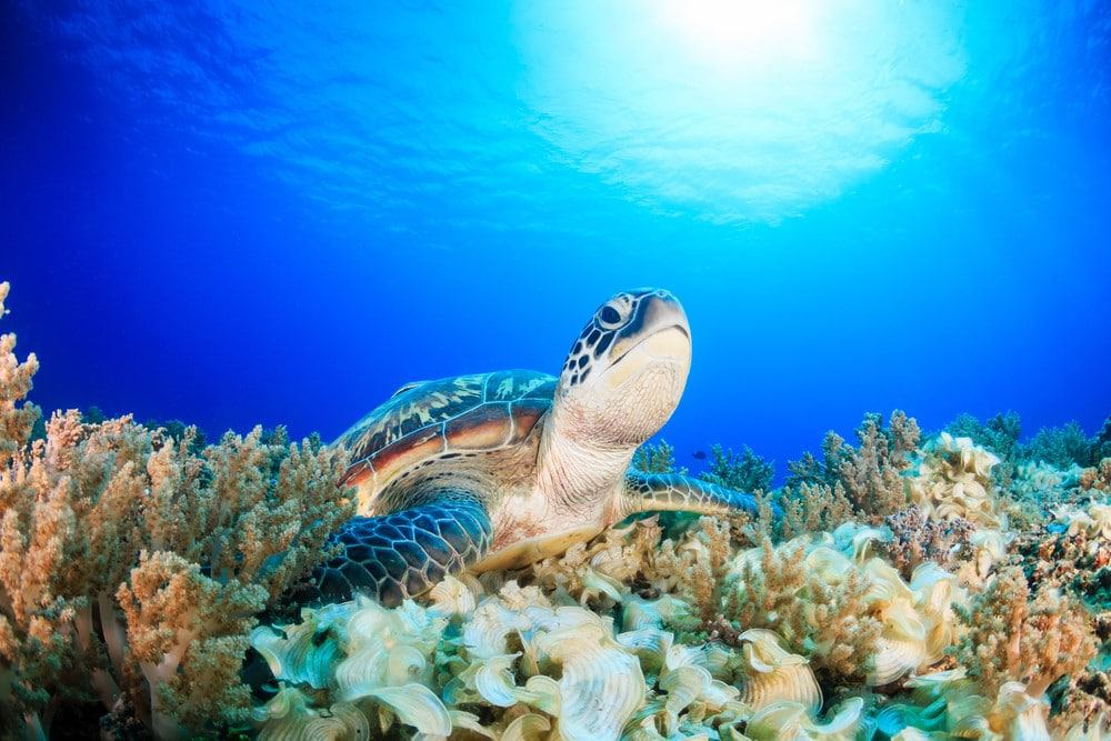 ver tortugas en Indonesia