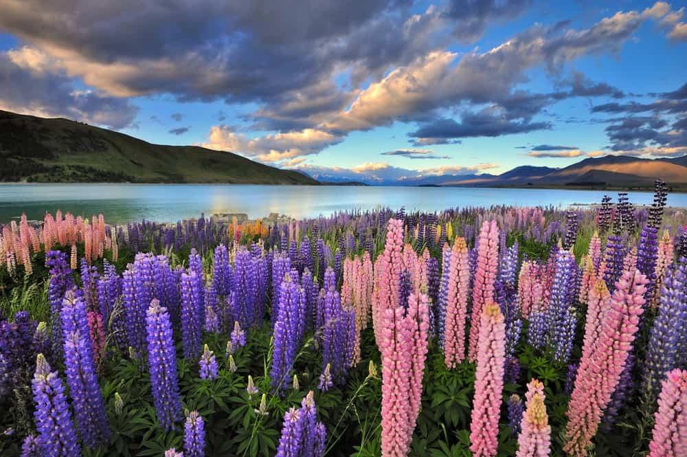 NZeTa Nueva Zelanda