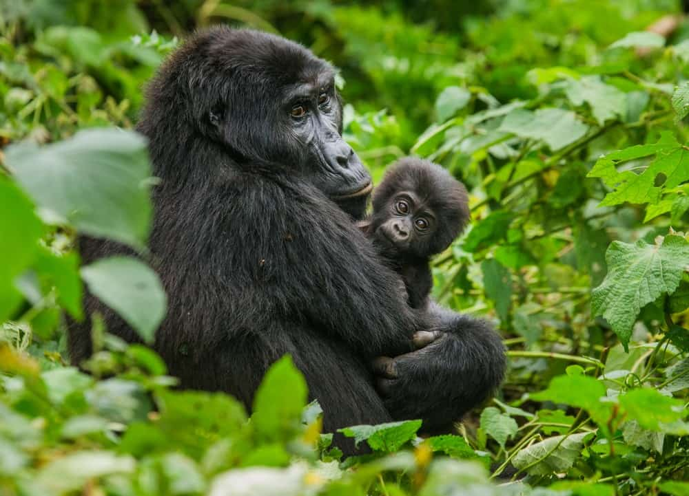 consejos para viajar a Uganda