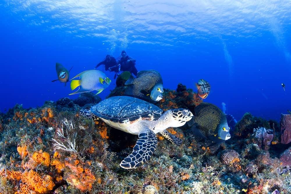 snorkel en Cozumel Mexico