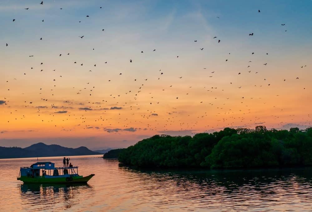 millón de murciélagos en Komodo