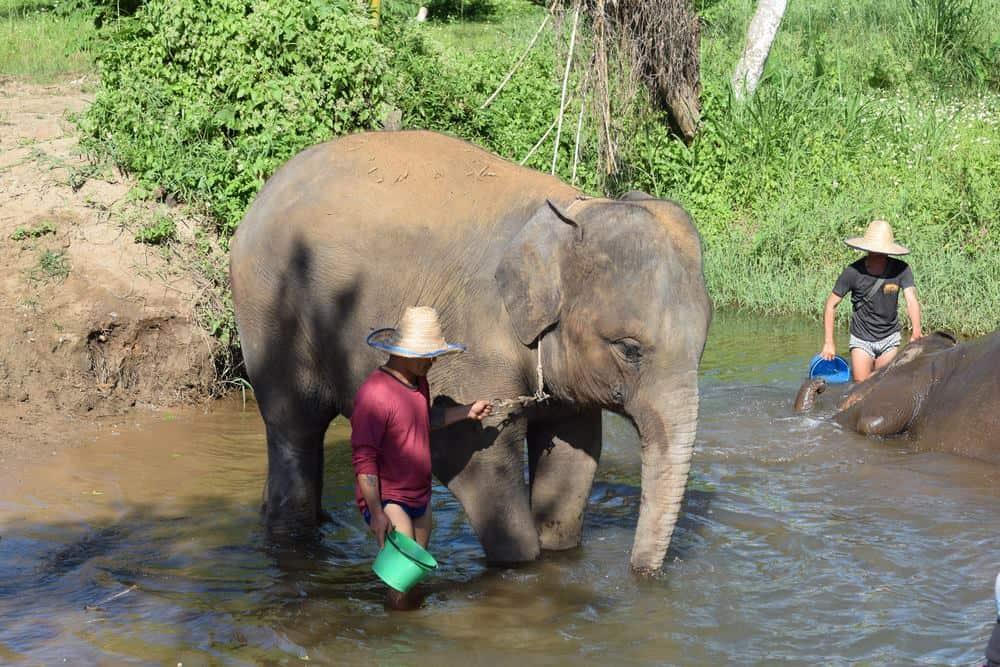 falsos santuarios de elefantes en Tailandia