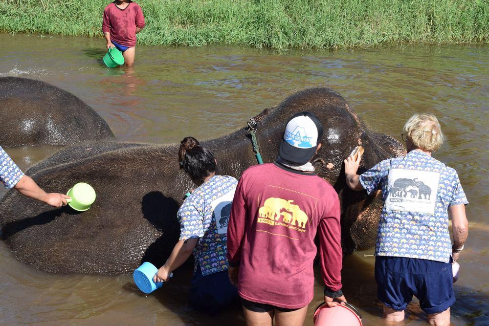 verdaderos santuarios de elefantes en Tailandia