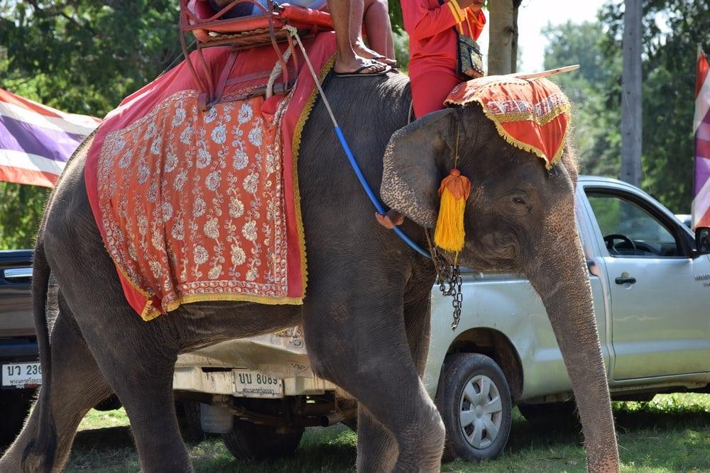 no montar elefantes en Tailandia