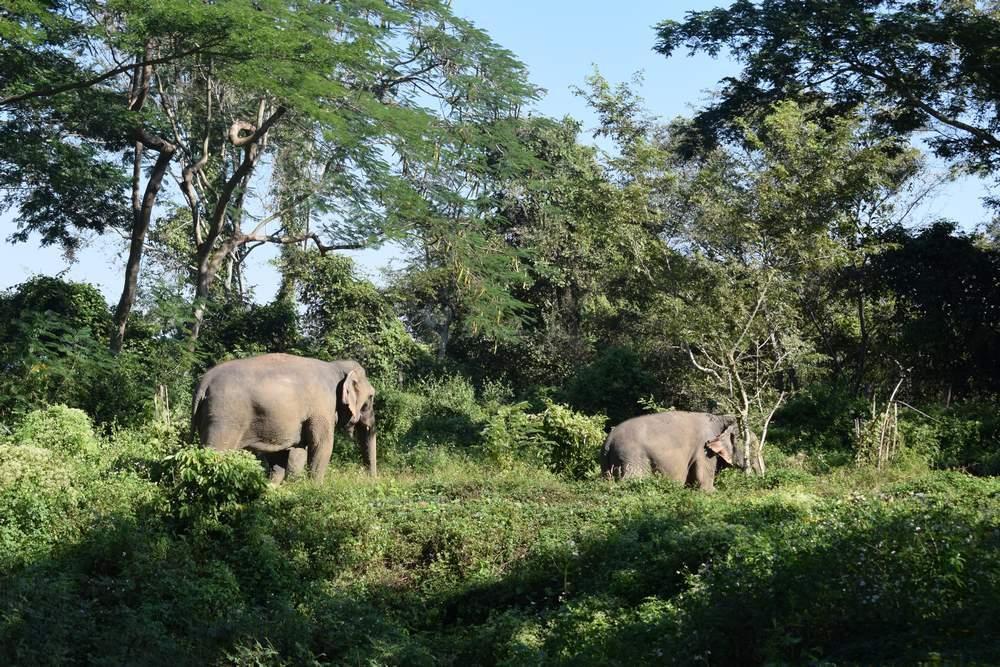 ver elefantes en Tailandia de forma responsable